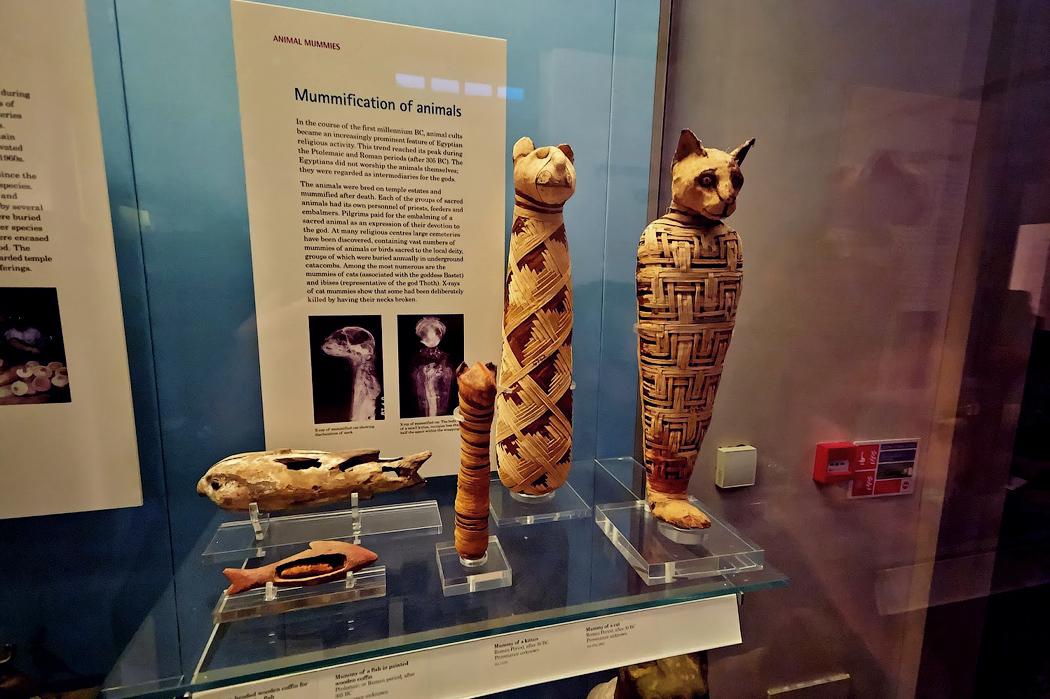 Британский музей истории